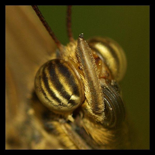 Butterfly Macro by Beanie76