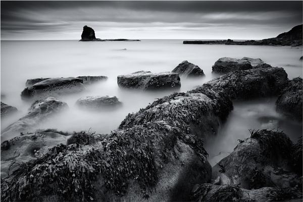 Seaweed by iansnowdon