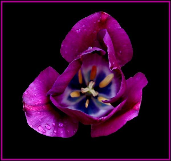 Deep Purple by Ben10