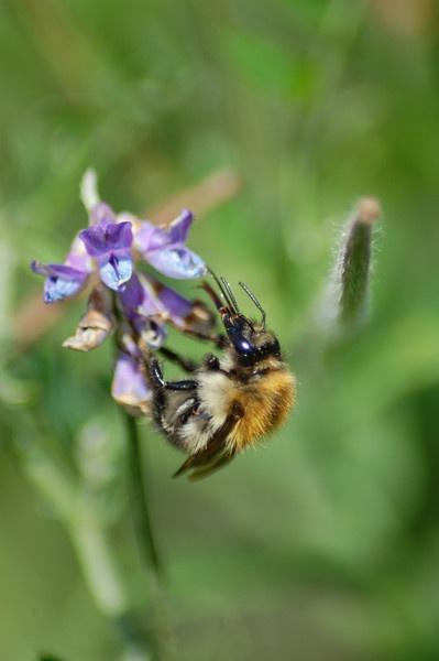 Bee by Bearspirit29