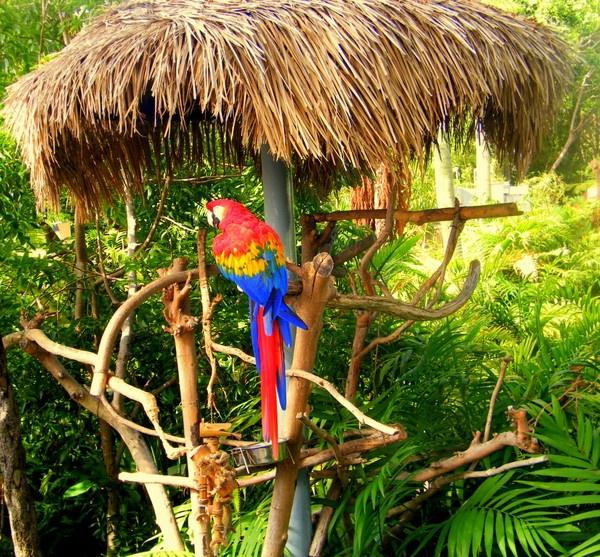 It\'s a parrot, It\'s a parrot. by Lizzie_x