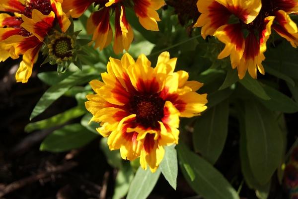 Bright Garden Flower by bigwulliemc