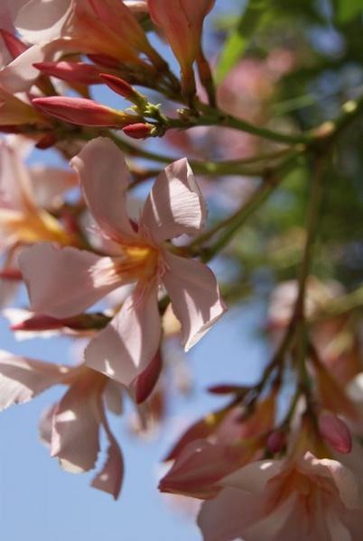 Shady Flowers by bigwulliemc