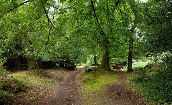 A walk in the woods by rolandb1952