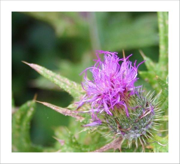 Prickly by emu78