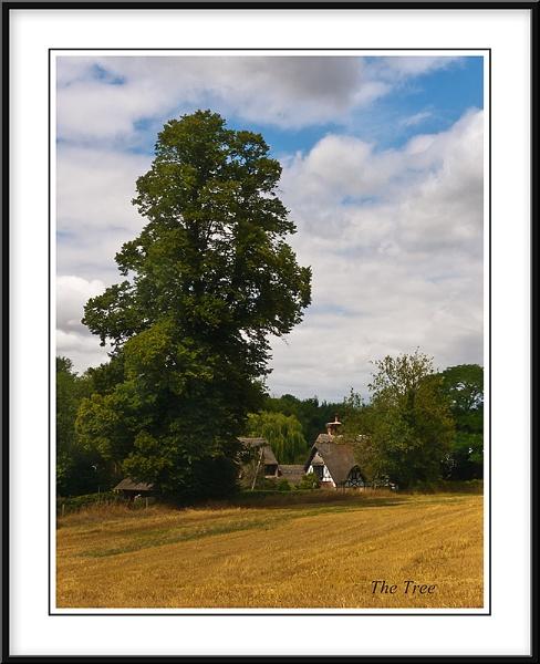 The Tree by Adrian_Reynolds