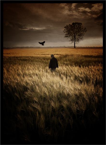 The Crow by clintnewsham