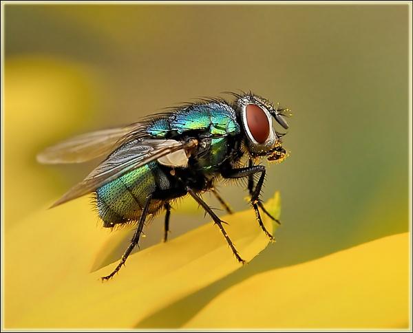 Pollen II by bricurtis