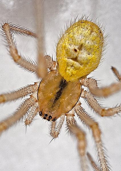 Spider by vagabond