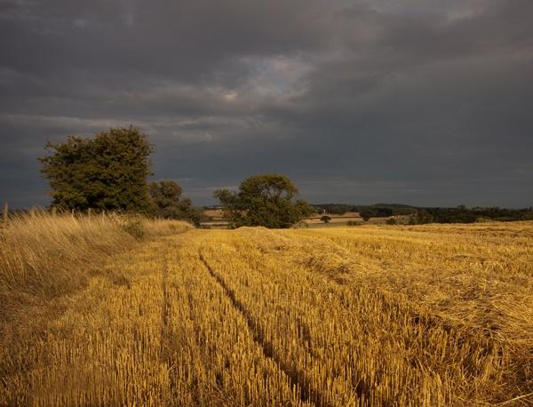Stormy Weather by Artois