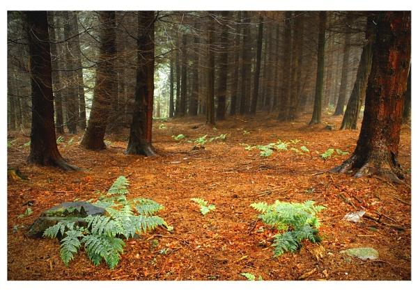 Mystical Forest. by Buffalo_Tom