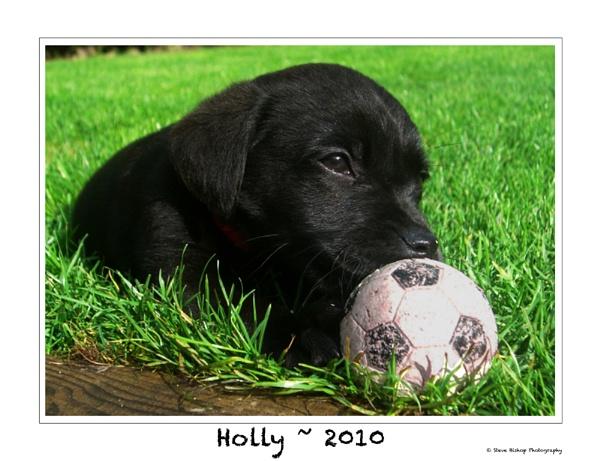 Holly by Stevebishop