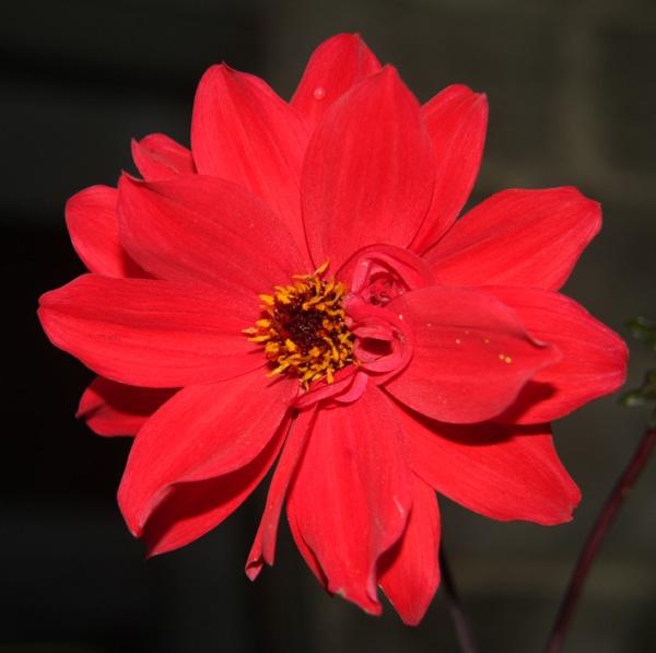 Flower by Ada