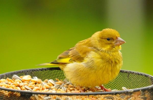 Baby Bird by tobara17