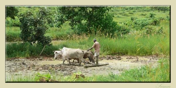 Ploughing by samarmishra