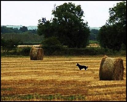 Summer fields(2) by xwang
