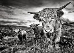 Malham Highlanders