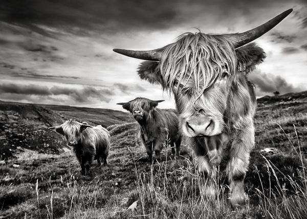 Malham Highlanders by IRaddict