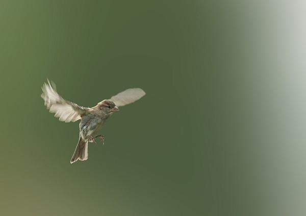 Determined Flight by Emmog
