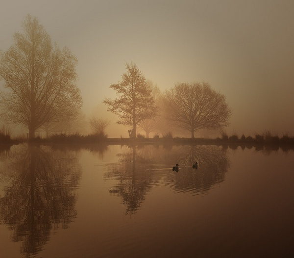 morning by agne