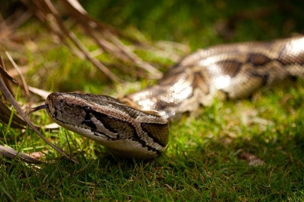 Big Snake!! by Weirdfish695
