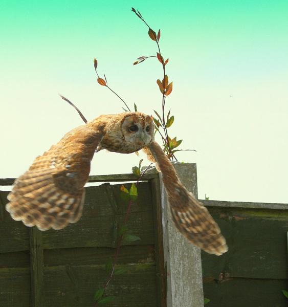 flight practice by gingerbenno