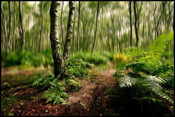 Dare to walk on ! by Niknut