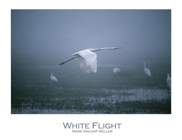 White Flight by MarkVMueller
