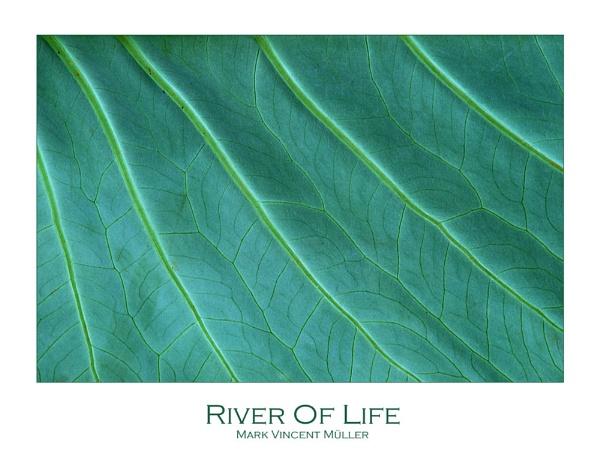 River Of Life by MarkVMueller