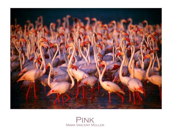 Pink by MarkVMueller
