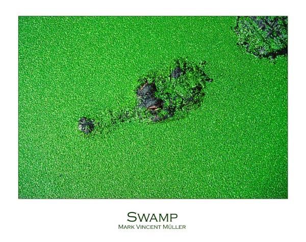 Swamp by MarkVMueller