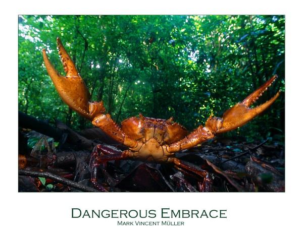Dangerous Embrace by MarkVMueller