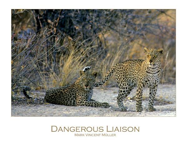 Dangerous Liaison by MarkVMueller