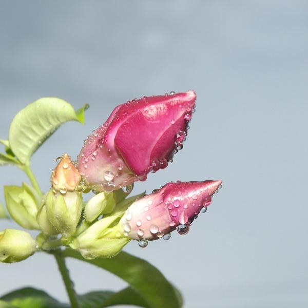 rain drops by nishchal