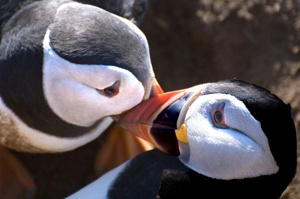 Love birds by JohnJenkins99