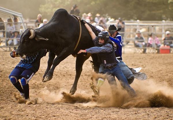 Rodeo by steve_evans