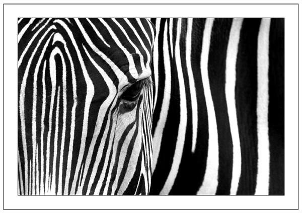 Stripes by ejtumman