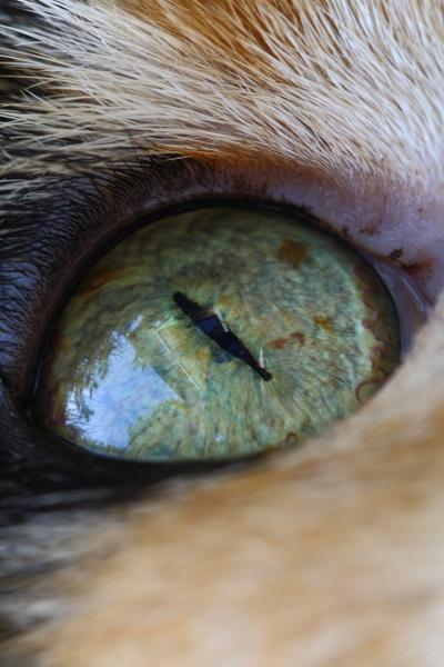 Cats eye by steve5452