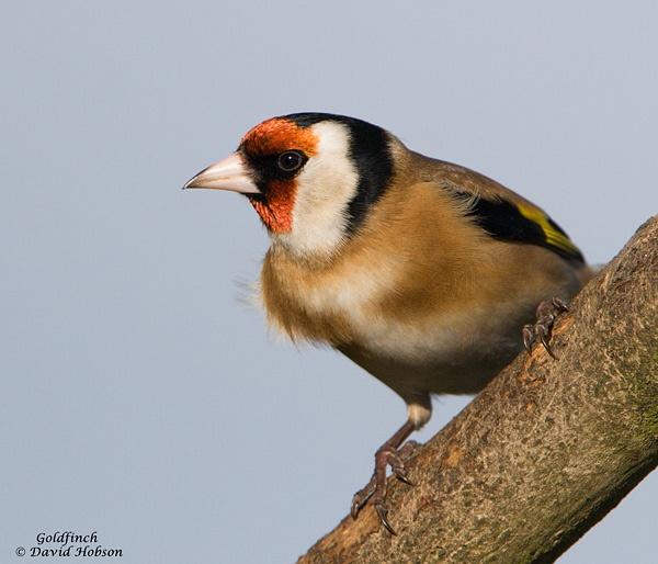 Birds eye by DaveHobbo