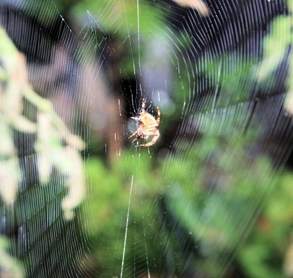 Itsy bitsy Spider by chuckspics
