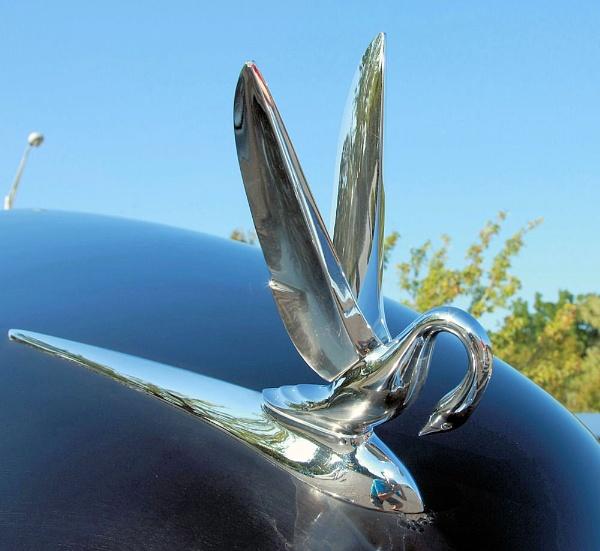 Silver wings by chuckspics