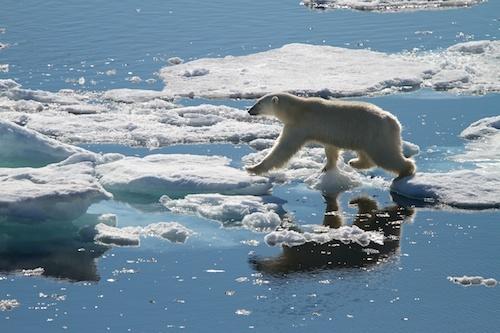 Polar Bear Leap by Scorpio74