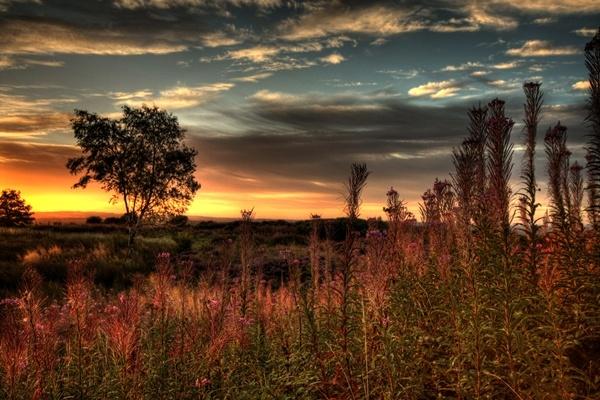 Waldridge Sunrise by mpphotographics