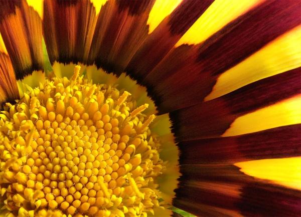 Sunshine Flower by Tonksfest