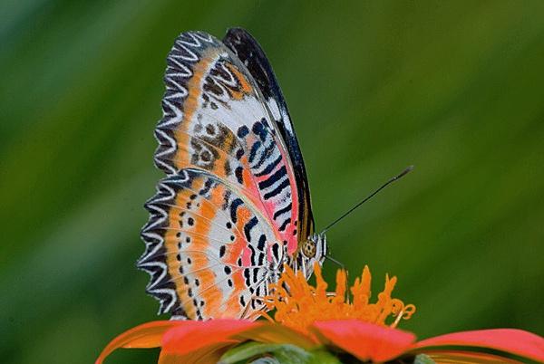 butterfly by jayhyk