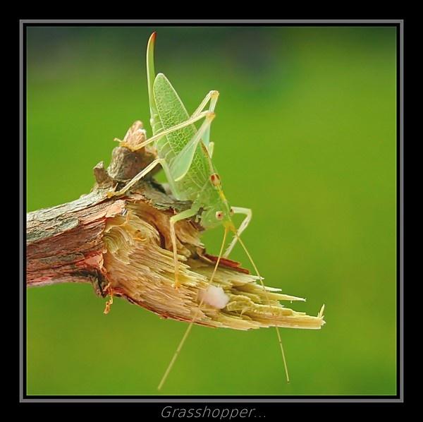 Grasshopper... by Dee73