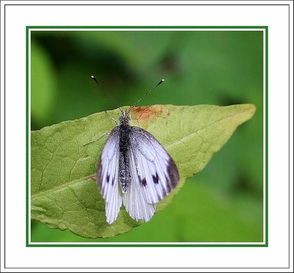 Butterfly by Dee73