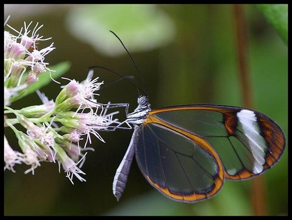 Glass wing by Beanie76