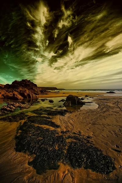 SEAWEED by Imagephotographics