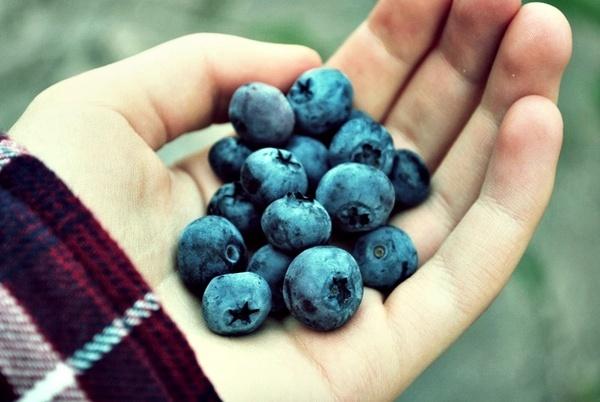 blueerries by Tamar